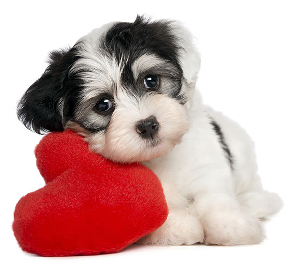 PUPPY-WITH-HEART